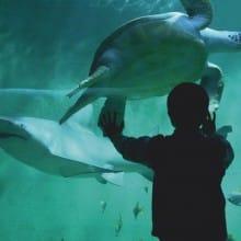 Pass Avantages - Grand Aquarium